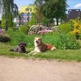 Plakat: DoggyKids - das Hundeeinmaleins für Kinder