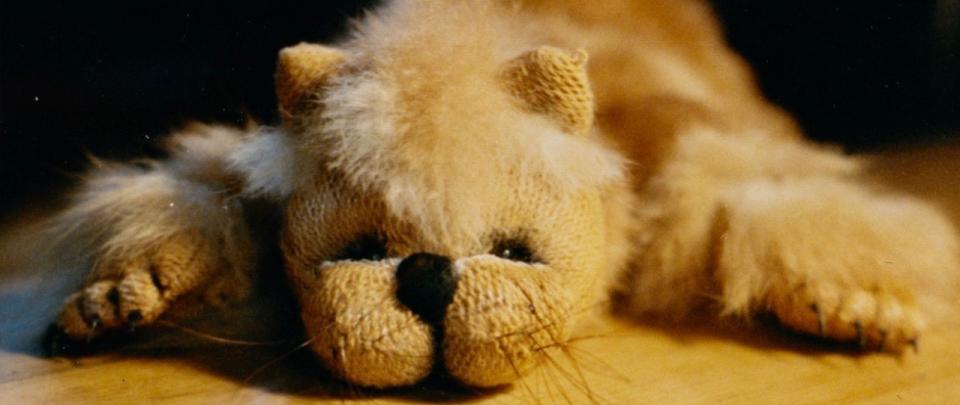 Bild: Ich will eine Katze