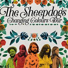 Bild: The Sheepdogs