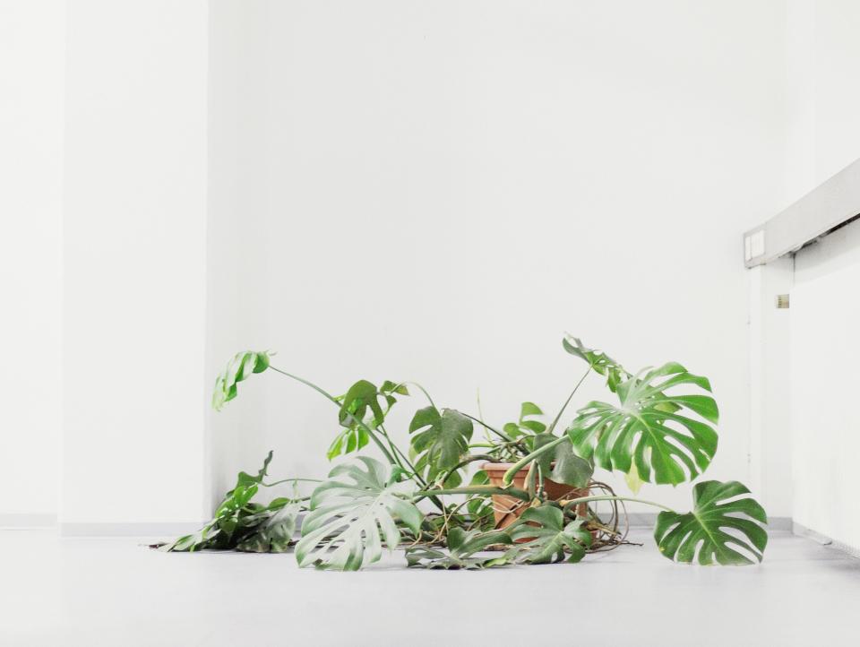 Bild: Frederik Busch_Andrea sucht ihren Fön_Aus der Serie German Business Plants_Fine Art Print, 40 x 30 cm