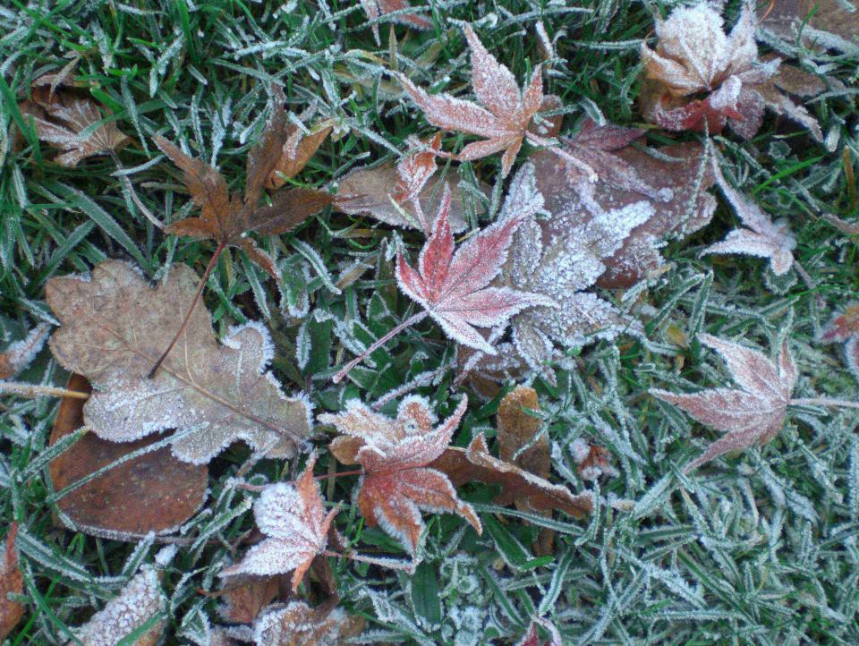 Bild: Erster Frost