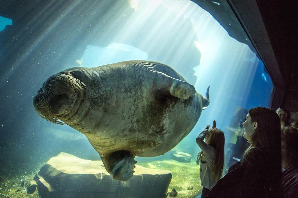 Bild: Herbstferien im Tierpark - Polarforscher gesucht!