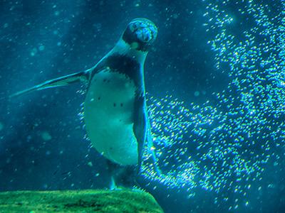 Bild: Schnuppertage im Eismeer im Tierpark Hagenbeck