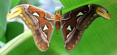 Bild: Zum Garten der Schmetterlinge in Aumühle