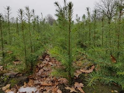 Bild: Wo die Bäume zur Schule gehen