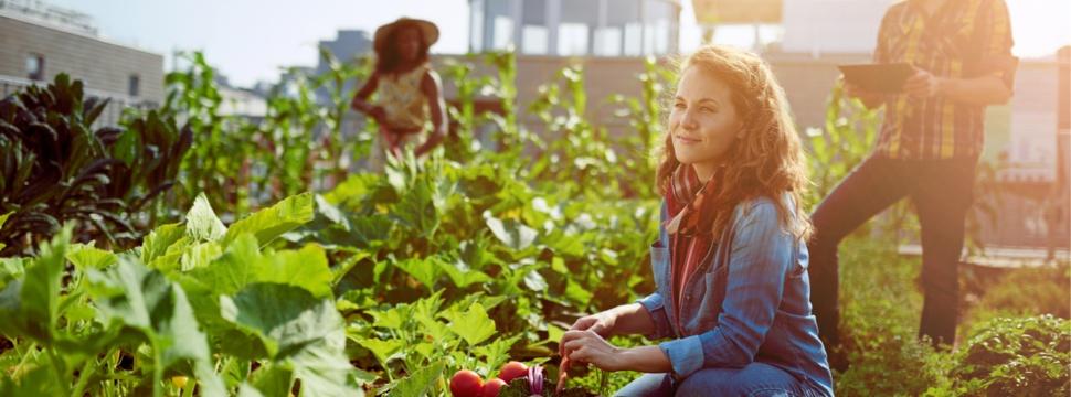 Gemeinschaftsgarten, © iStock.com/julief514