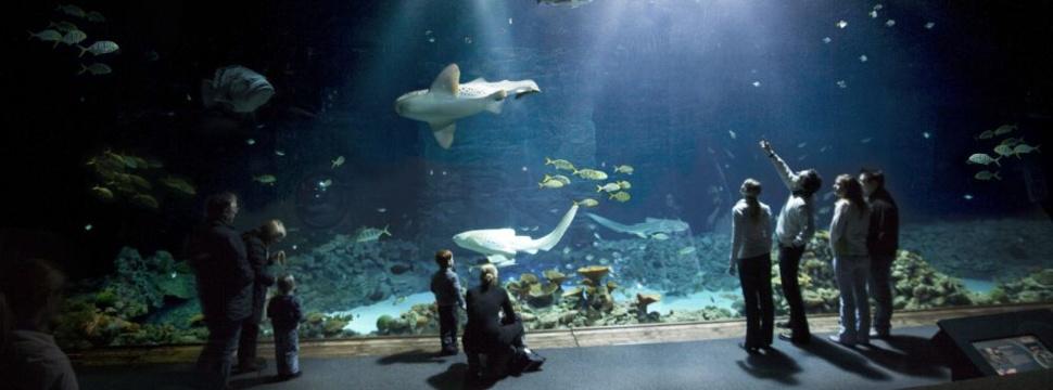 Tropen-Aquarium, © Tierpark Hagenbeck