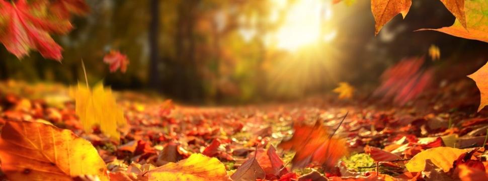Herbst, © iStock/Smileus
