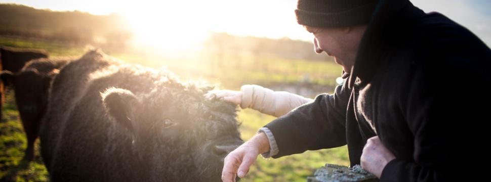 Gallowayfleisch von regionalen Landwirten, © EinStückLand