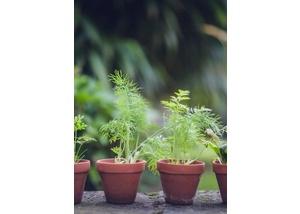 Gartennachmittag*
