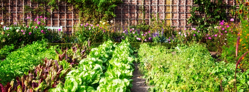 Gartencenter, © iStock.com/firina
