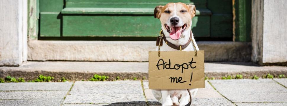 Hund adoptieren, © iStock/damedeeso