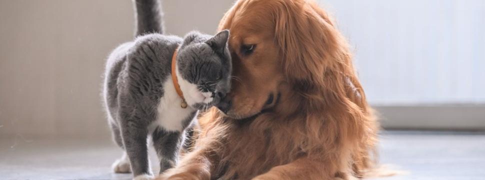 Hund und Katze,© iStock.com/chendongshan