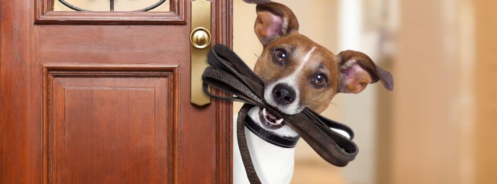Hund mit Leine, © iStock/damedeeso