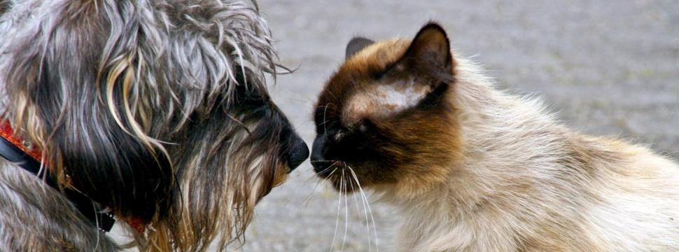 Hund und Katze, © Ulla Trampert  / pixelio.de